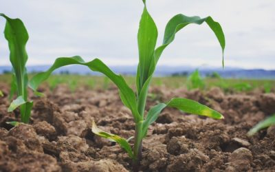 2017 Corn Planting