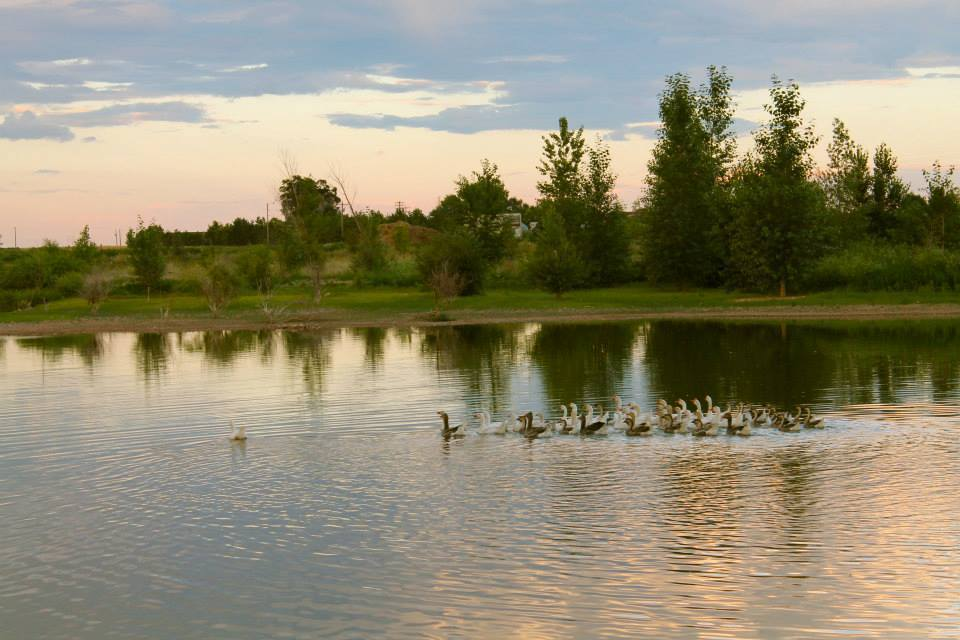 Organics and Wildlife Biodiversity