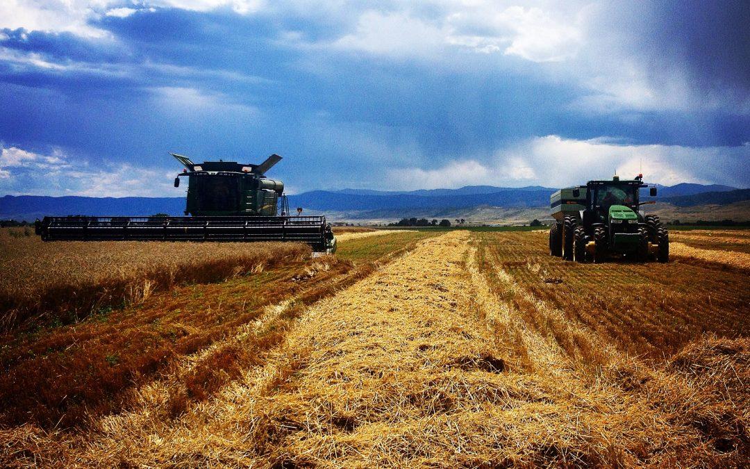 Winter Wheat Harvest 2014